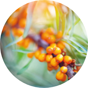sea-buckthorn-berry