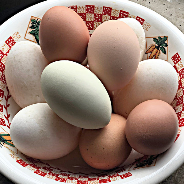 Eggs Pasture Raised