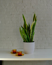 Load image into Gallery viewer, Snake Plant Laurentii