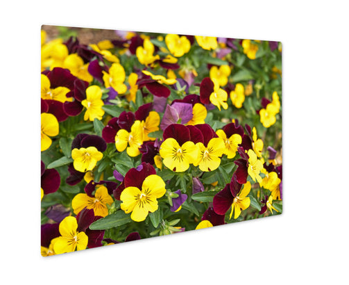 Metal Panel Print, Flower Pansy Purple Yellow - Life Relevance