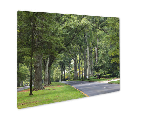 Metal Panel Print, Queens Road West In Myers Park In The Summer With Tall Willow Oaks - Life Relevance