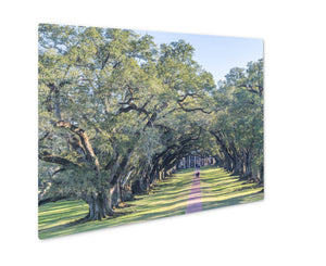 Metal Panel Print, Oak Alley Plantation Louisiana - Life Relevance