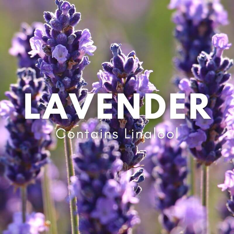 what is linalool