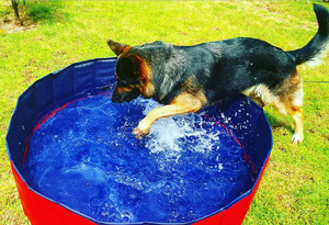 Hot Sale Outdoor/Indoor Pool Folding Dog Pool with Drain Plug - Carrywon