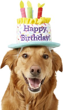 How to Have a Pet-Friendly Birthday Party