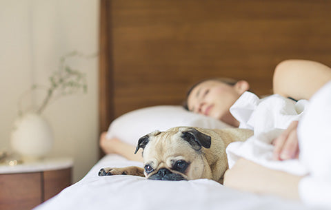 Dog laying on bed with owner