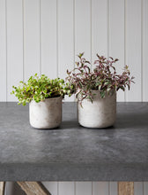 Load image into Gallery viewer, Set of 2 Cement Plant Pots in Stone