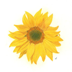 Sunflower - Recycled Greeting Card by Local Artist