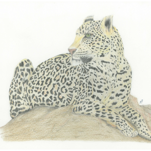 Leopard - Recycled Greeting Card by Local Artist