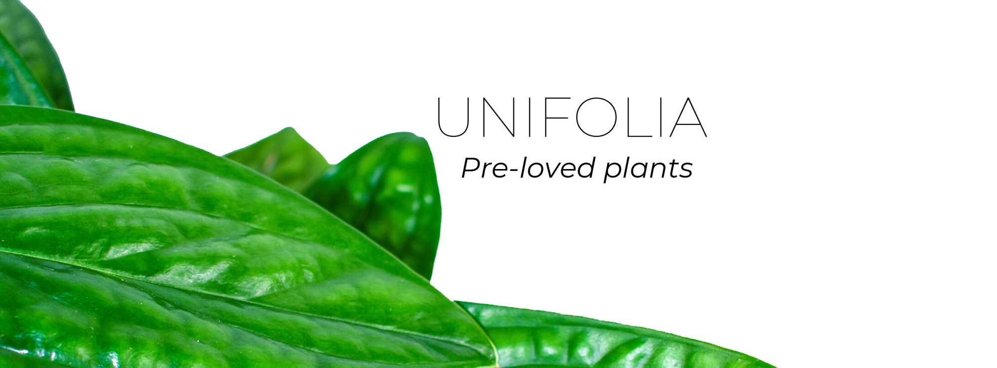 Unifolia - only preloved tropical plants!