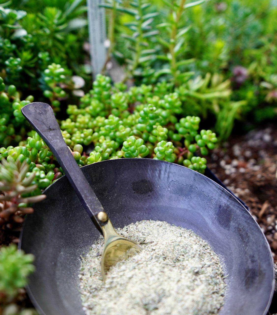 The Everyday Herb Seasoning Blend