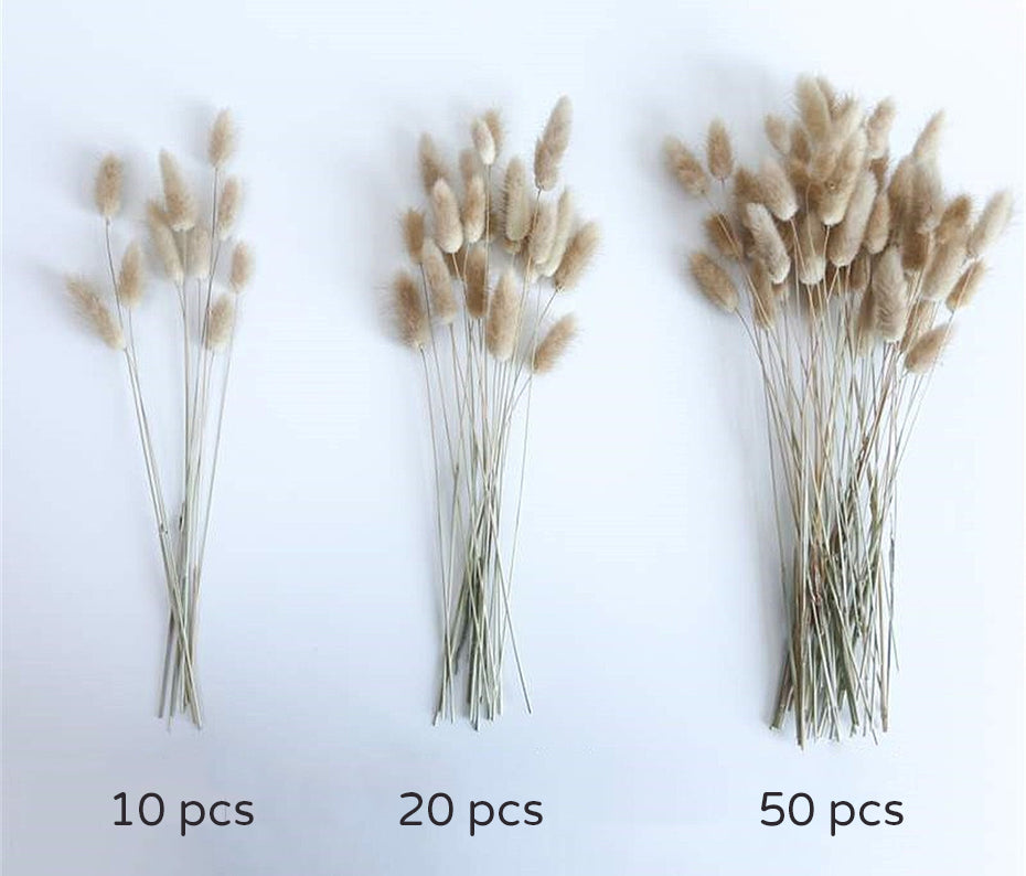 Lagurus Ovatus Hare's Tail Bouquets Real Dried Natural Plants Floral Bouquet Decoration For Living Room Kitchen Dining Room Table Trending Interior Decor