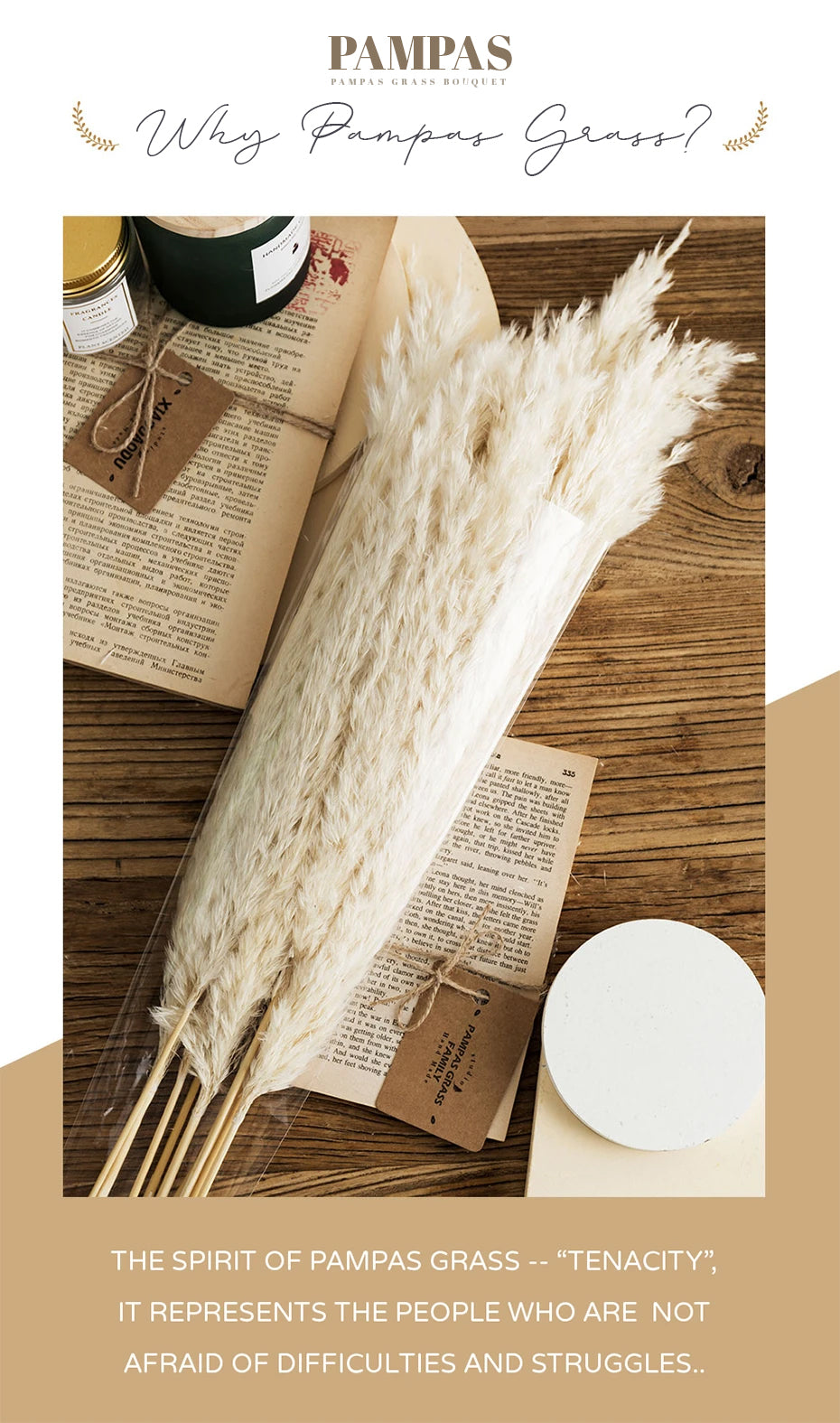 Real Pampas Grass Decor Natural Dried Flowers Modern Bohemian Home Styling Bleached White Color Fluffy Natural Floral Bouquet For Boho Style Home Interior Design