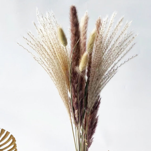 White Pampas Grass Bouquet Home Decor Real Dried Plants Natural Floral Bouquet For Living Room Dining Room Bedroom Celebration Event Decoration Assorted Colors