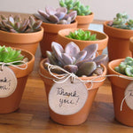 Succulent Plants Live 6 Pack of Assorted Rosettes Succulents Fully Rooted in 2'' Planter Pots with Soil, Hand Selected Variety Pack of Mini Live Succulents Cactus Indoor Outdoor Easy Care Plants