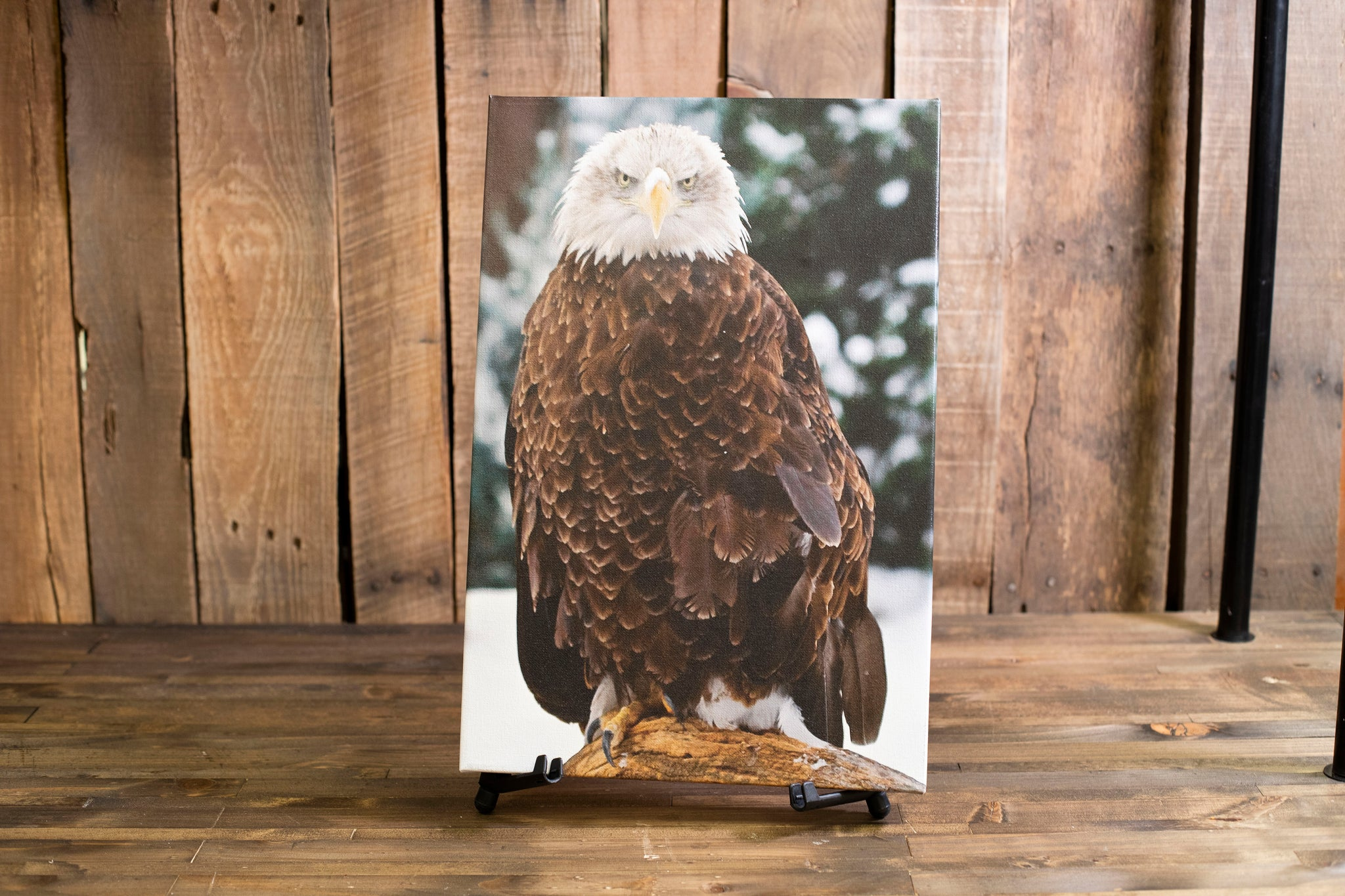 CPN Aviary Eagle Canvas Pictures
