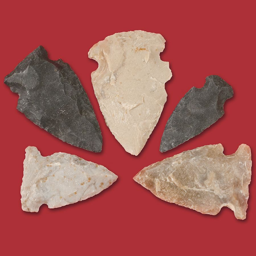 Common Arrowhead