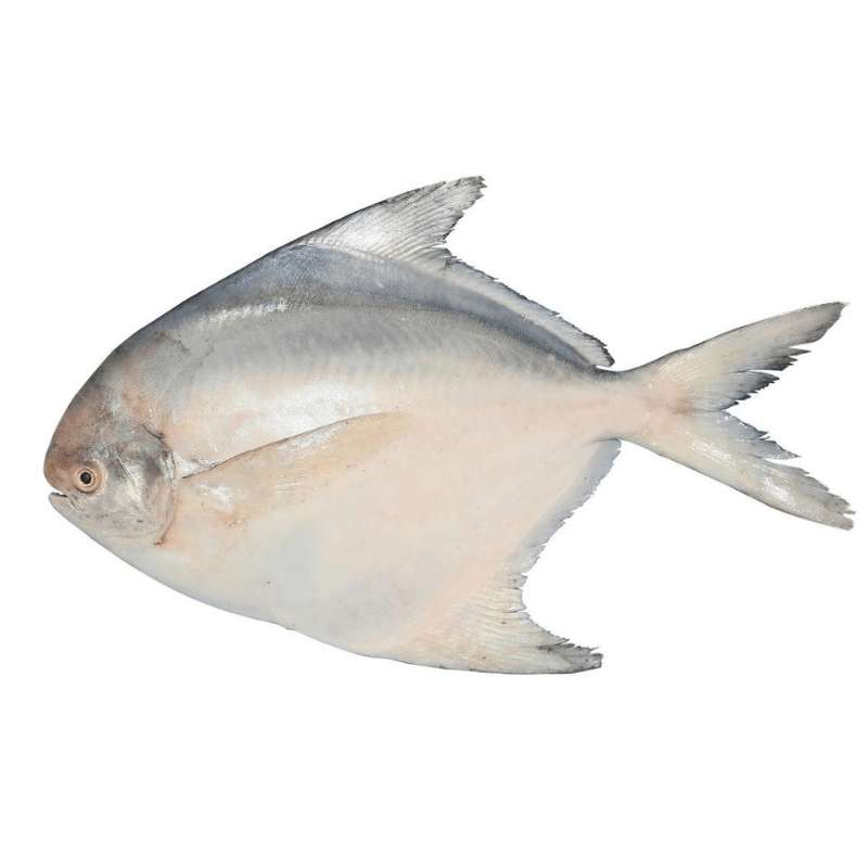 Fresh White Pomfret (400g- 550g) - Market Boy