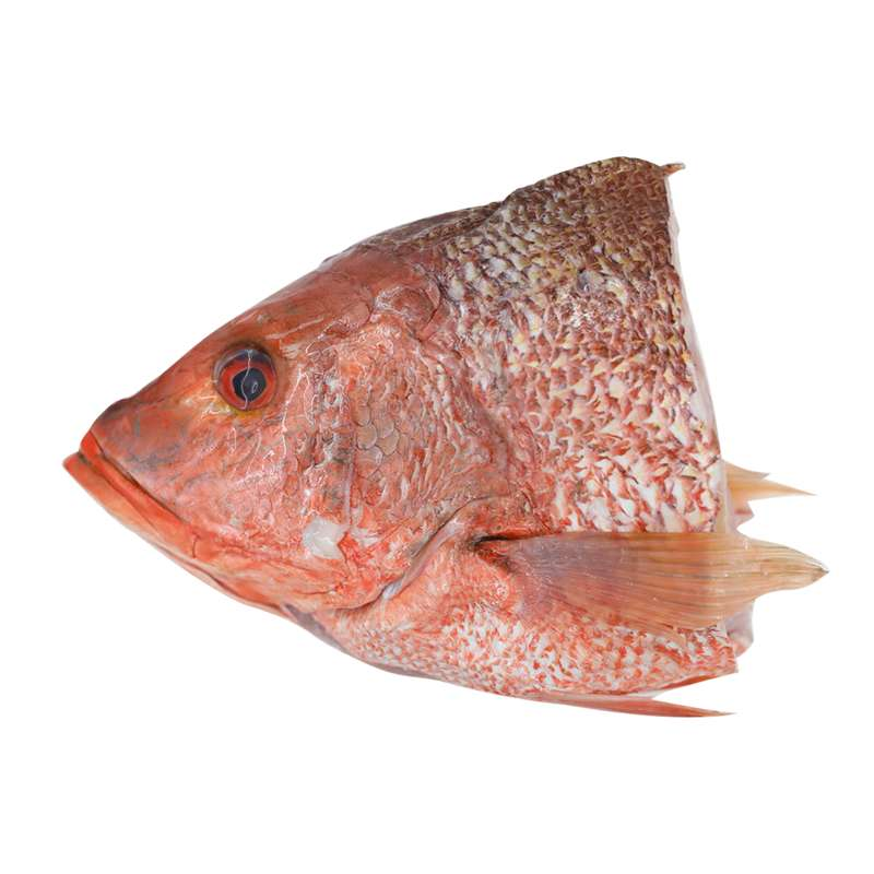 Fresh Red Snapper Fish Head (~1kg) - Market Boy