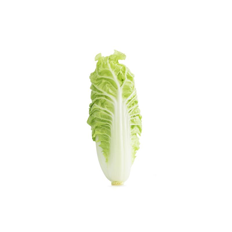 Cabbage Long - Market Boy