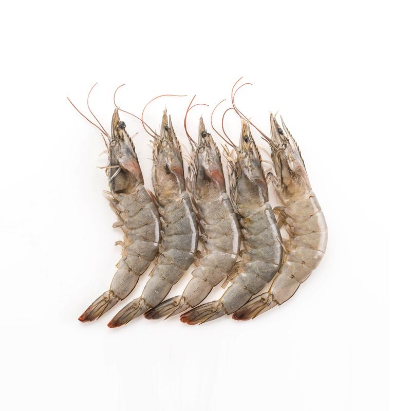 Fresh Farm Prawns | 鲜池虾