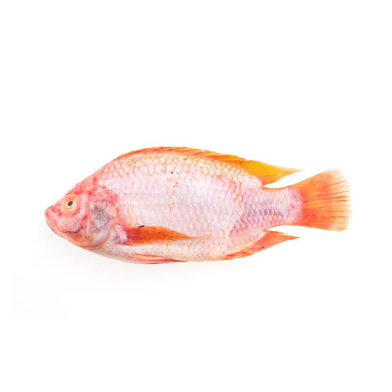 Fresh Red Snapper (500-650g)