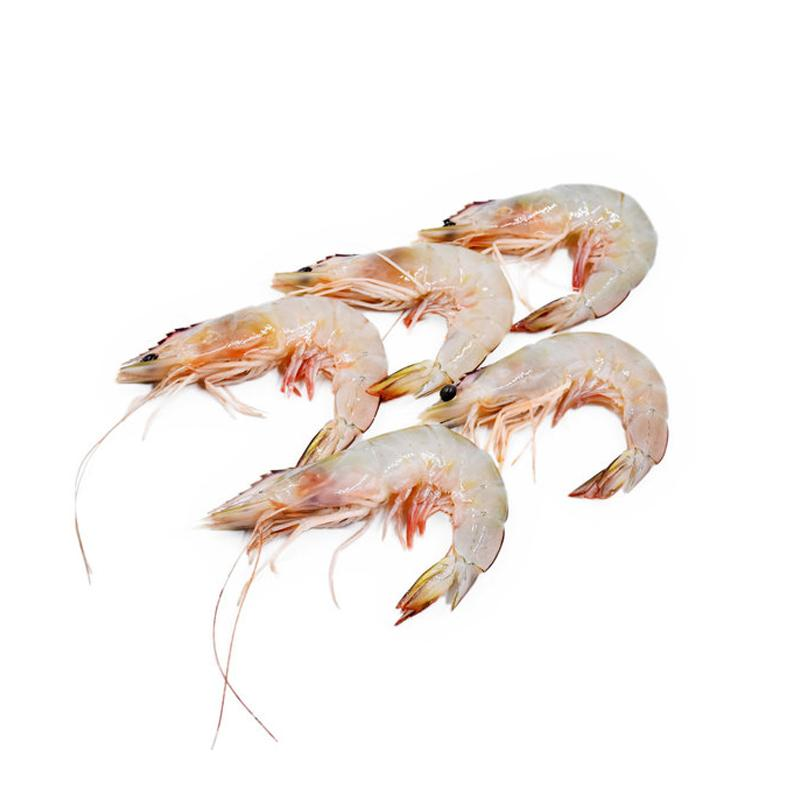 Fresh Sea Prawns