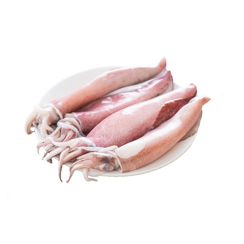 Sotong (Medium/ Large)