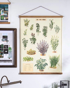 Culinary herbs vintage wall chart
