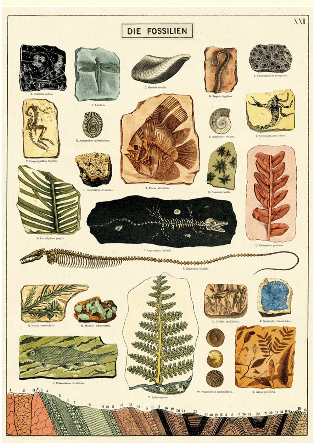 Fossils vintage wall chart