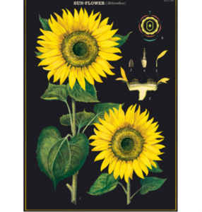 Sunflowers Vintage Wall Chart