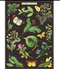 Load image into Gallery viewer, Caterpillars & Butterflies Vintage Wall Chart