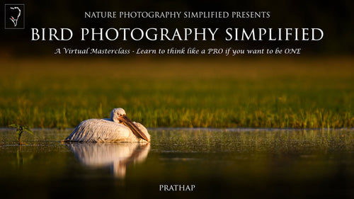 Bird Photography Simplified
