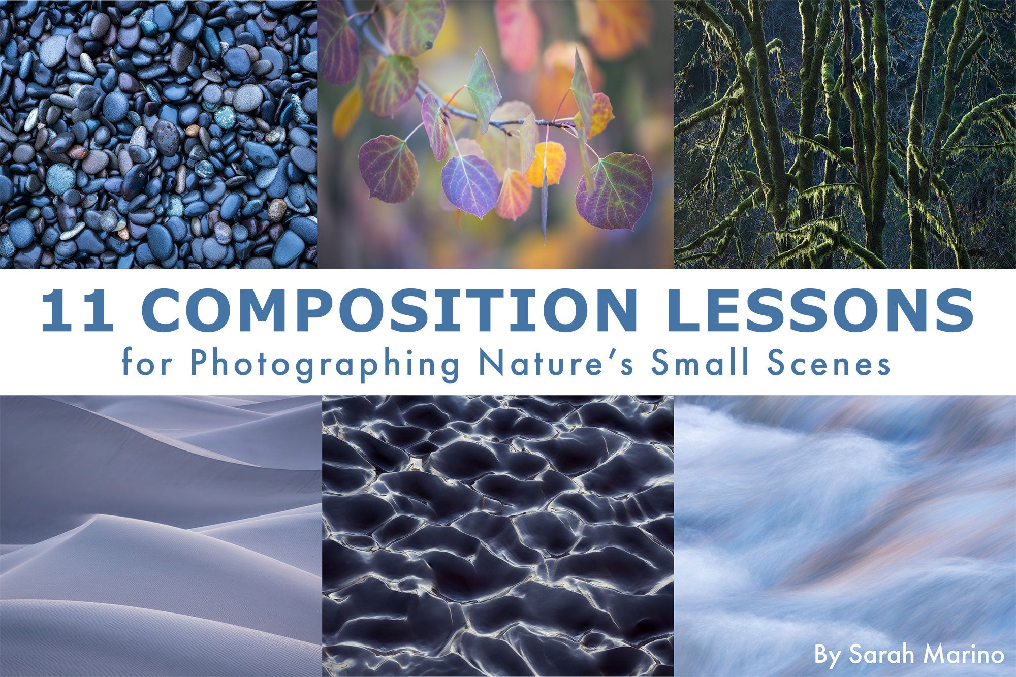 11 Composition Lessons For Photographing Nature's Small Scenes