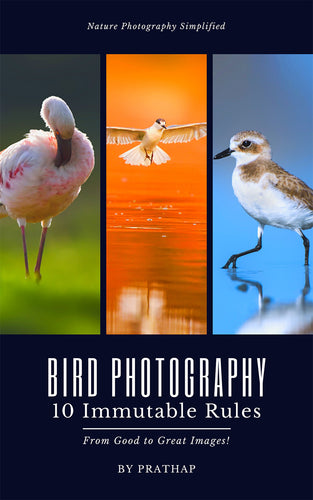 Bird Photography: 10 Immutable Rules