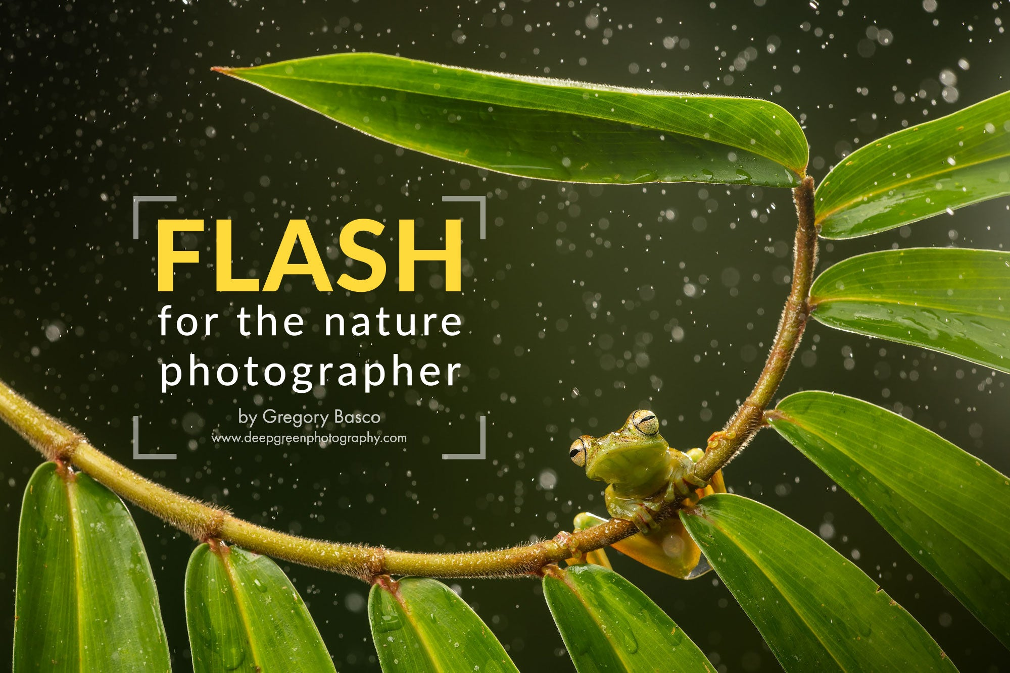 Flash for the Nature Photographer