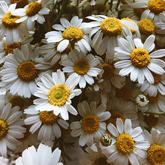 Is Chamomile tea good for digestion?