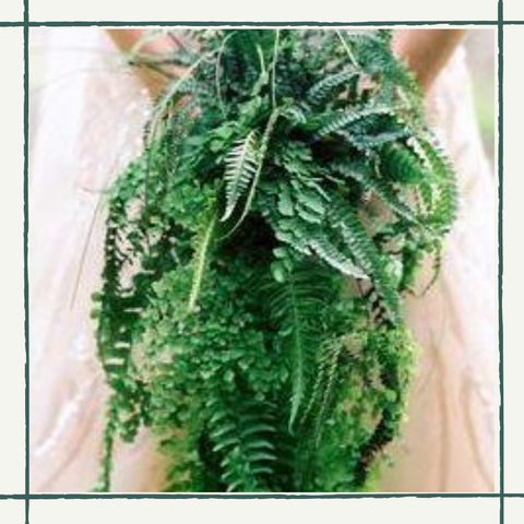 Cascading Fern Package