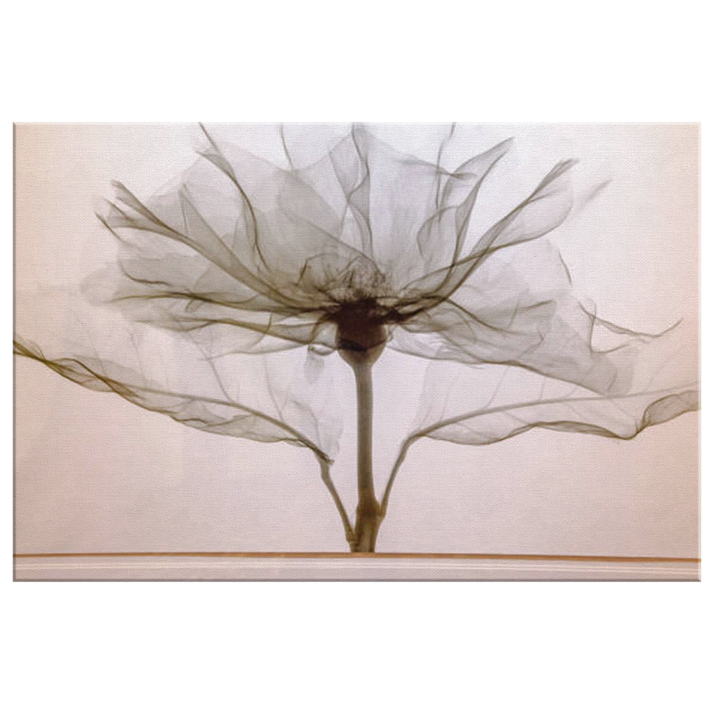 Floral X-Ray