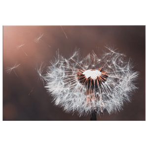 Wish on a Dandelion