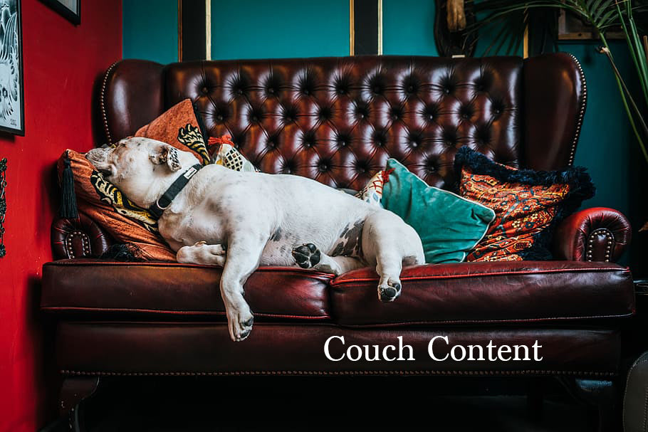 Dog on couch for couch content Low Maintenance.