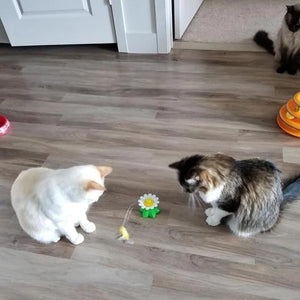 Interactive Bird Toy For Cats