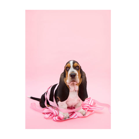 Note Cards- Basset Hound