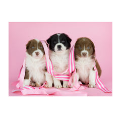 Note Cards- Border Collie Mix Trio