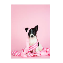 Note Cards- Border Collie Mix