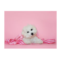 Note Cards- Bichon Frise
