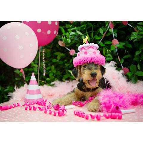 Birthday - Airedale Terrier