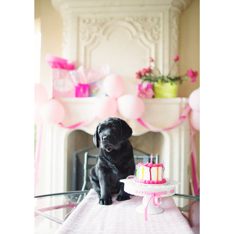 Birthday - Black Labrador