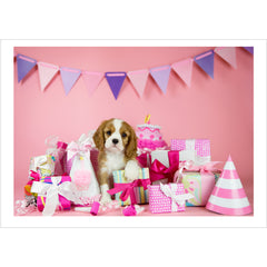 Birthday - Cavalier King Charles Spaniel