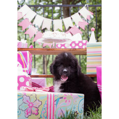 Birthday- Newfoundland